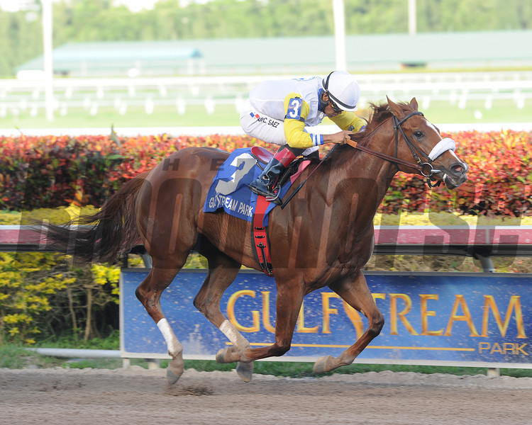 Munnings Sister wins the 2014 Awesome Feather at Gulfstream Park.<br /> Coglianese Photos/Lauren King
