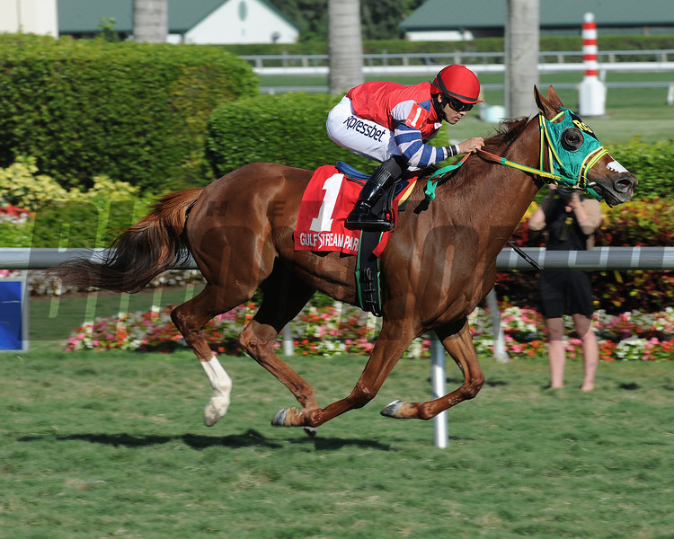 Parranda wins the 2014 Florida Sunshine Millions Filly & Mare Turf.<br /> Coglianese Photos