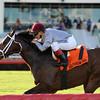 Mshawish wins the 2014 El Prado Stakes at Gulfstream Park.<br /> Coglianese Photos/Natalie Fawkes