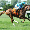 Cabo Cat wins the 2014 Manila Stakes at Belmont Park.<br /> Coglianese Photos