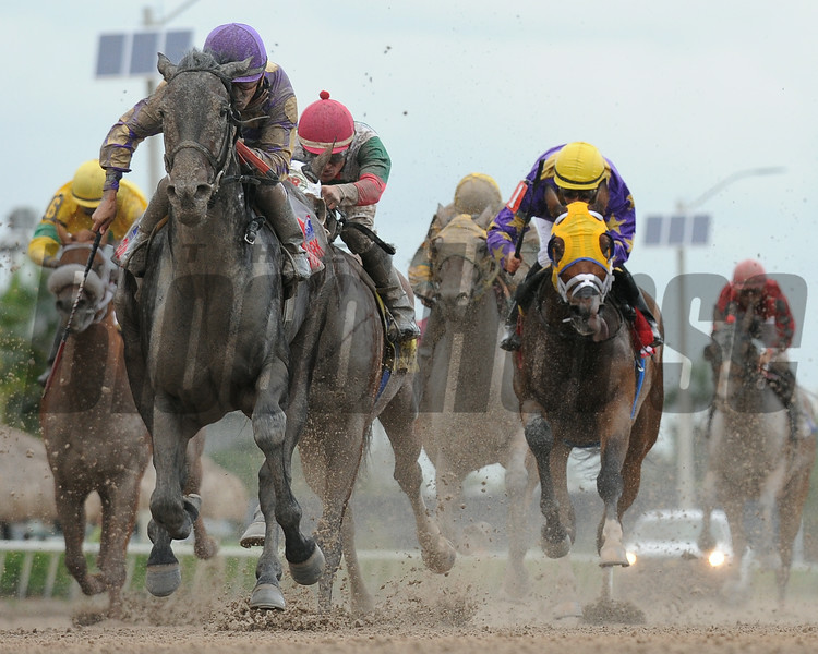 C. Zee wins the 2014 Cherokee Run Stakes at Gulfstream Park.<br /> Coglianese Photos/Leslie Martin