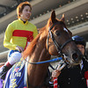 Copano Rickey wins the February Stakes in Japan. 2/23/2014<br /> Masakazu Takahashi Photo