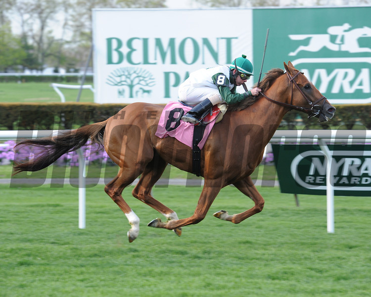 Five Iron wins the 2014 Fort Marcy.<br /> Coglianese Photos