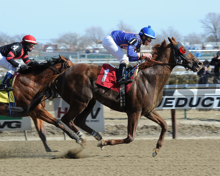 Strapping Groom wins the 2014 Tom Fool at Aqueduct.<br /> Coglianese Photos/Chelsea Durand
