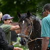 Mr Speaker at Saratoga<br /> Coglianese Photos/Susie Raisher