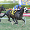 My Storm Trooper storms to victory in race 7 at Gulfstream Park. <br /> Coglianese Photo
