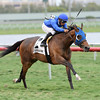 Anjaz wins the 2014 Orchid Stakes at Gulfstream Park.<br /> Coglianese Photos
