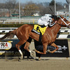 My Miss Sophia wins the 2014 Gazelle at Aqueduct.<br /> Coglianese Photos