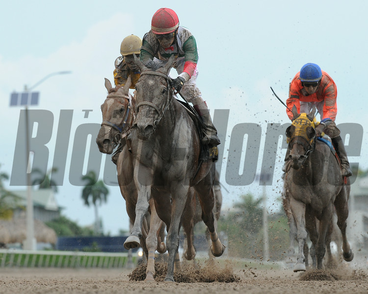 Little Alexis wins the 2014 Cash Run Stakes at Gulfstream Park.<br /> Coglianese Photos/Leslie Martin