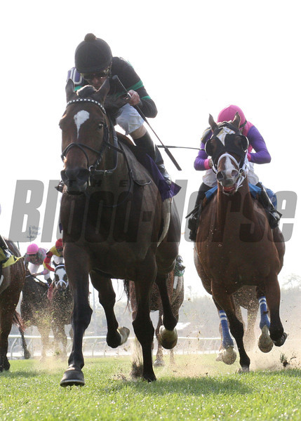 I Dazzle, left, with Robby Albarado aboard, wins the 39th running of the Red Camelia Stakes at the Fair Grounds Race Course and Slots in New Orleans, LA, Saturday, March 22, 2014. The $60,000 stake for four year old fillies and mares was run at about 1 1/16 miles on the turf in 1:46.19. Finishing second was Tensas Harbor and Ladyzarbridge was third. The victory gave Albarado his fourth win of five for the day.