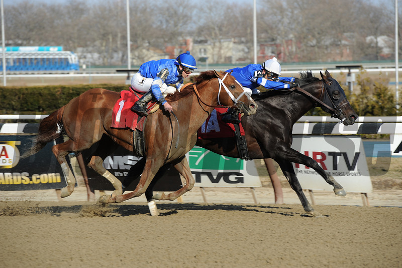 Romansh wins the 2014 Excelsior at Aqueduct.<br /> Coglianese Photos