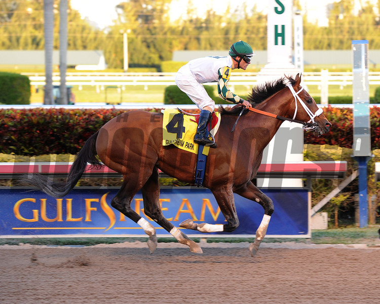 Mucho Macho Man wins the 2014 Florida Sunshine Millions Classic.<br /> Coglianese Photos
