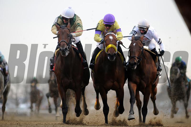 Samraat wins the 2014 Gotham Stakes at Aqueduct.<br /> Coglianese Photos