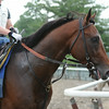 Tonalist jogs July 3, 2014.<br /> Photo by Susie Raisher
