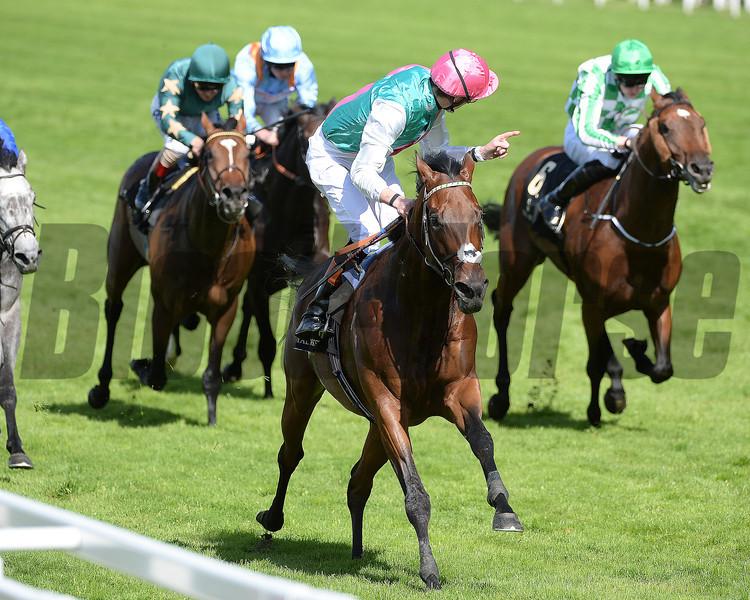 Kingman, James Doyle up, wins the St James Place Stakes, Royal Ascot, Ascot Race Course, England, 6/17/14 photo by Mathea Kelley