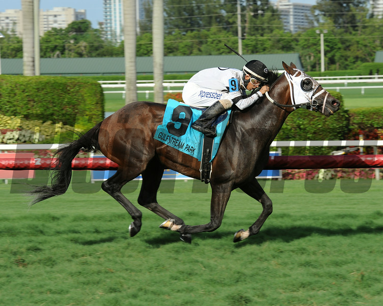 Burn the Mortgage wins the 2014 Eight Miles East Stakes at Gulfstream Park.<br /> Coglianese Photos/Leslie Martin