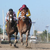 Sweet N Discreet wins the 2014 Florida Sunshine Millions Distaff Stakes.<br /> Coglianese Photos