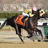 Vickis Dancer wins the New York Stallion Series 11/25/2014.<br /> Coglianese Photos