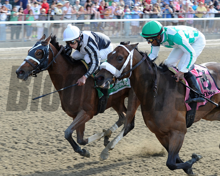 Hot Stones wins the 2014  Bed o' Roses at Belmont Park. <br /> Coglianese Photos/Chelsea Durand