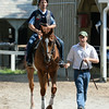 Wise Dan works at Saratoga on July 18, 2014<br /> Coglianese Photos/Adam Mooshian