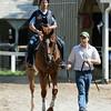 Wise Dan works at Saratoga on July 18, 2014<br /> Coglianese Photos/Adam Mooshian