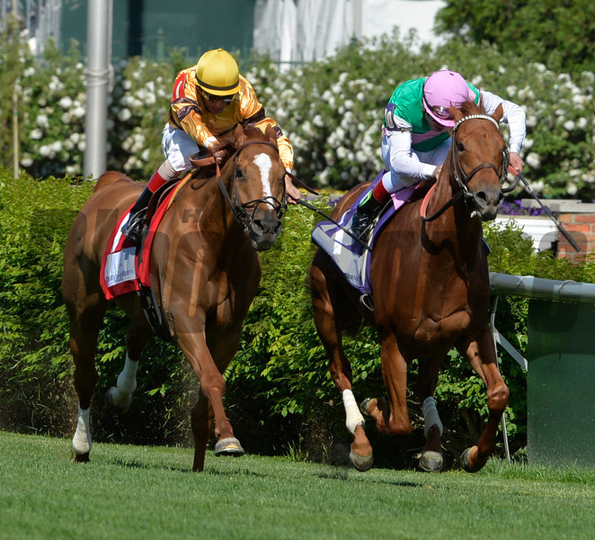 Wise Dan ridden by jockey John Velazquez, left out duels Seek Again with Joel Rosario to the wire in the Woodford Reserve Turf Classic Saturday afternoon May 3, 2014 at Churchill Downs in Louisville, Kentucky.   (Skip Dickstein / Times Union)