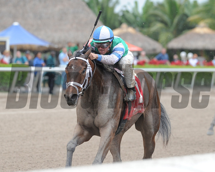 Sweet Whiskey wins the 2014 Old Hat Stakes.<br /> Coglianese Photos/Kenny Martin