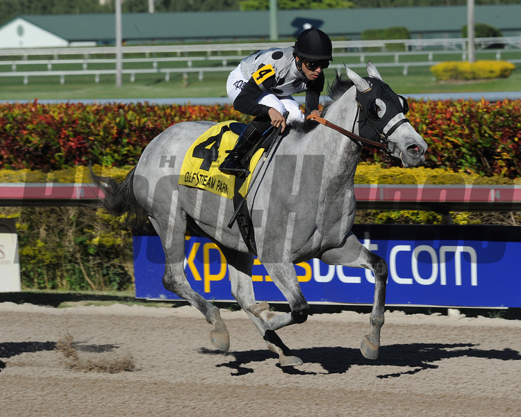 Ullapool wins the 2014 Florida Sunshine Millions Filly and Mare Sprint.<br /> Coglianese Photos