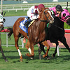 Tapicat wins the 2014 Voodoo Dancer Stakes.<br /> Coglianese Photos/Lauren King