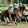 Star Grazing winning the Fleet Indian Stakes 8/24/2014.<br /> Coglianese Photos