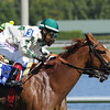 Ready Signal wins the Ten Palm  Stakes at Gulfstream Park 2/23/2014.<br /> Coglianese Photos/Lauren King