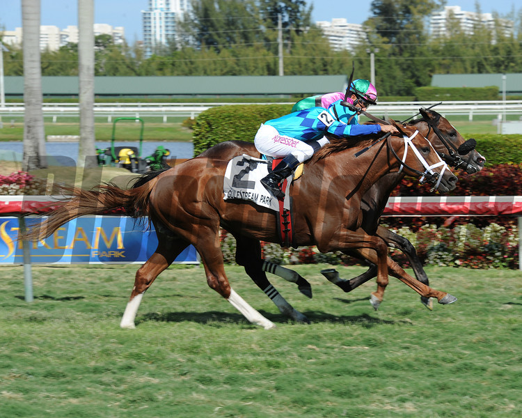 Yes I'm Lucky wins the 2014 Mr. Light Stakes at Gulfstream Park.<br /> Coglianese Photos/Leslie Martin