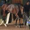 Jess's Dream at Saratoga Race Course, August 4, 2014<br /> Coglianese Photos/Susie Raisher