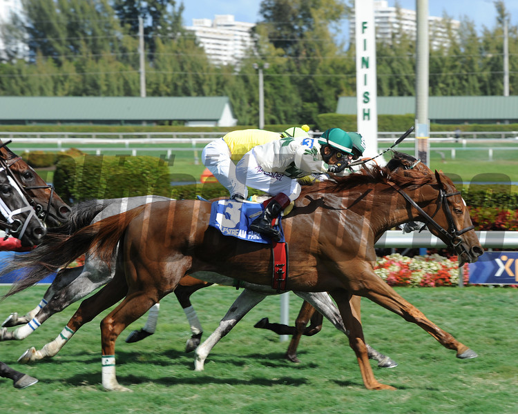 Ready Signal wins the Ten Palm  Stakes at Gulfstream Park 2/23/2014.<br /> Coglianese Photos/Natalie Fawkes
