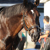 Mr Speaker at Belmont Park May 25<br /> Coglianese Photos/Susie Raisher