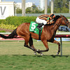 Little Mike wins the 2014 Flying Pidgeon Stakes at Gulfstream Park.<br /> Coglianese Photos/Leslie Martin