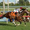 Mshawish wins the 2014 El Prado Stakes at Gulfstream Park.<br /> Coglianese Photos/Leslie Martin