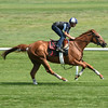 Wise Dan works at Saratoga on July 18, 2014<br /> Coglianese Photos/Susie Raisher