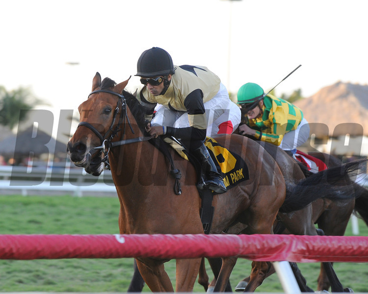 Twilight Eclipse wins the 2014 Mac Diarmida Stakes at Gulfstream Park. <br /> Coglianese Photos/Kenny Martin