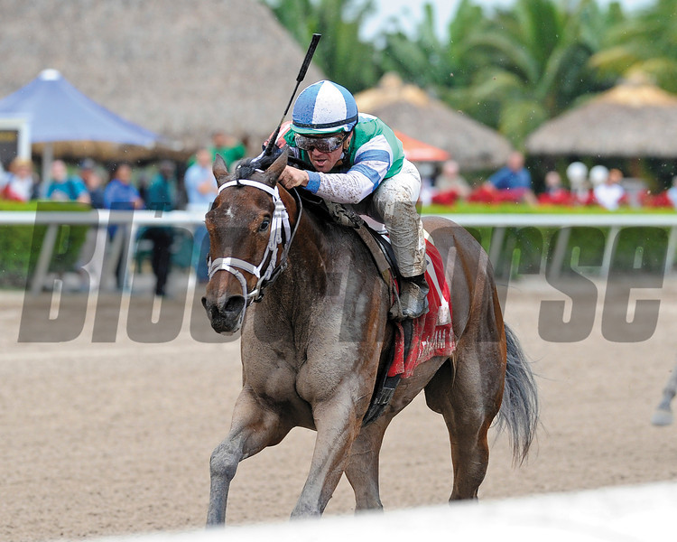 Sweet Whisky wins the Old Hat Stakes at Gulfstream Park. <br /> Coglianese Photo