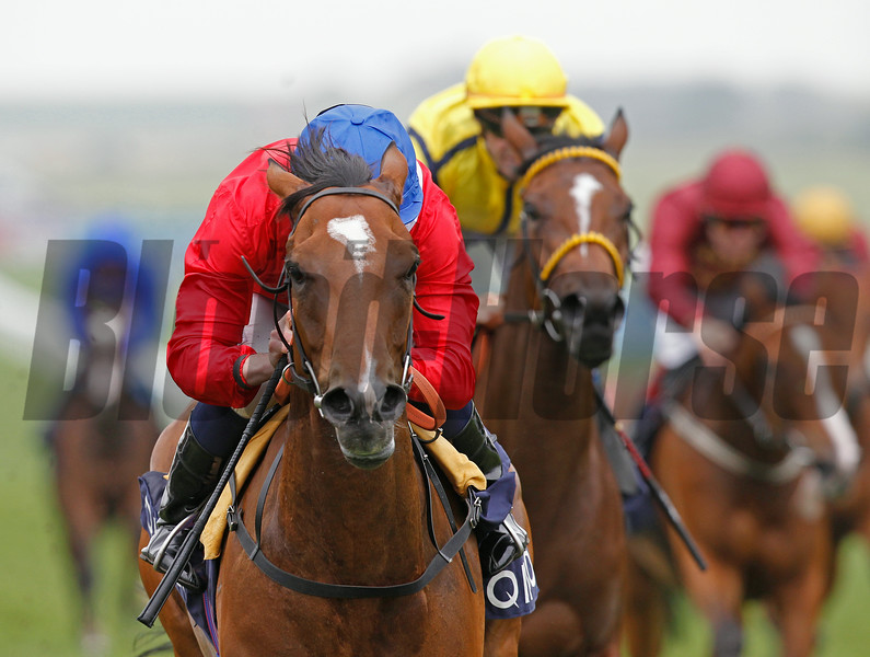 The QIPCO Falmouth Stakes. Newmarket 7/11/14.<br /> Integral ridden by Ryan Moore (red&blue) wins fron Rizeena (yellow)<br /> Trevor Jones Photo