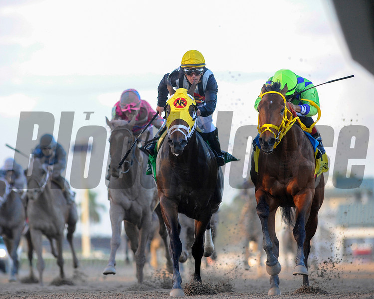 Wildcat Red and jockey Luis Saez wins the Grade II Fountain of Youth Stakes at Gulfstream Park on February 22, 2014.