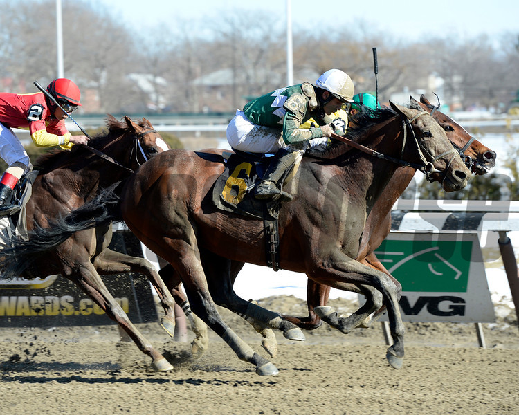 Zivo wins the 2014 Kings Point Stakes at Aqueduct.<br /> Coglianese Photos/Joe Labozzetta