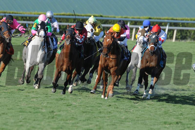 Star Channel wins the 2014 Florida Sunshine Millions Turf.<br /> Coglianese Photos