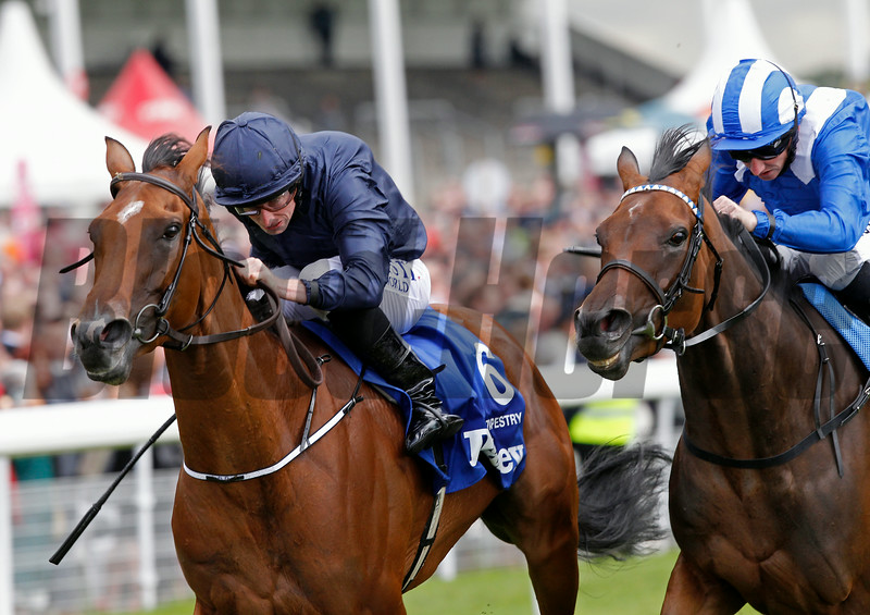 Racing from York 21/8/14 The Darley Yorkshire Oaks.<br /> Tapestry (left) Ryan Moore wins from Taghrooda ridden by Paul Hanagan.<br /> Trevor Jones Photo