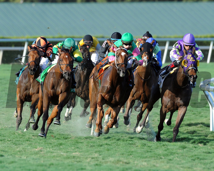 Believe In Charlie wins the Ladies Turf Sprint Stakes at Gulfstream Park on February 23, 2014.<br /> Coglianese Photo