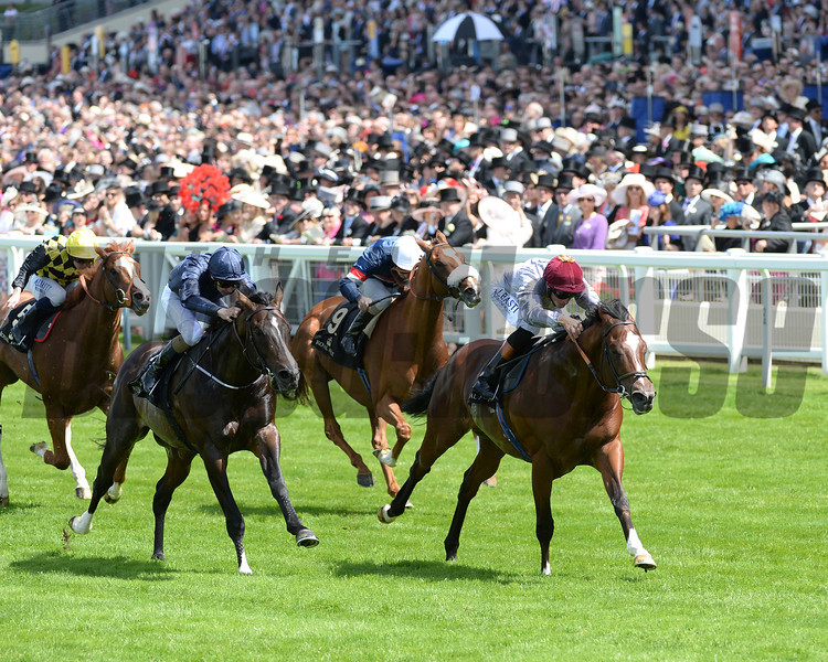 Toronado wins the 2014 Queen Anne Stakes.<br /> Photo by Mathea Kelley.