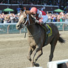 Coup de Grace wins the 2014 Amsterdam at Saratoga.<br /> Coglianese Photos/Adam Mooshian