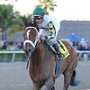 Mucho Macho Man wins the 2014 Florida Sunshine Millions Classic.<br /> Coglianese Photos