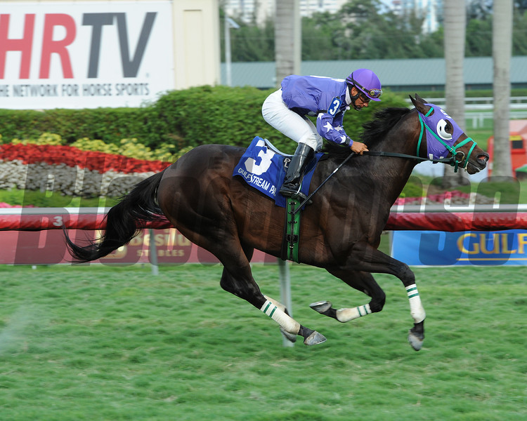 Bold Thunder wins the 2014 Silks Run Stakes at Gulfstream Park.<br /> Coglianese Photos/Leslie Martin